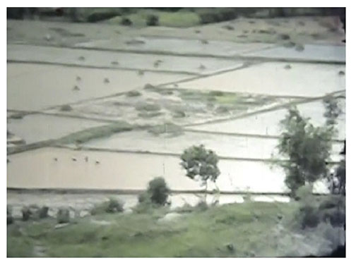 Planting Rice Below Hill 65